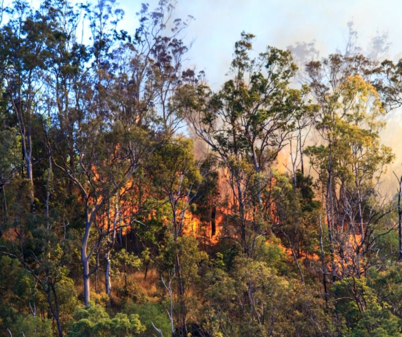 Fire on Hill in Hunter Valley