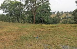 Vacant Block of Land Before Building a Hunter Designer Home