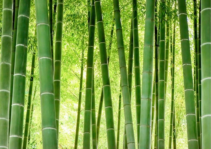 Bamboo that is used for Flooring