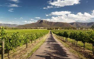 Road with Grape Vines